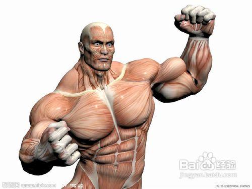 4个动作练出完美<a href=http://www.muscles.com.cn/xiongbu/ target=_blank class=infotextkey>胸肌</a>