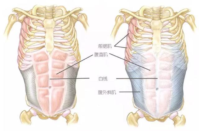 提问答疑:腹肌要坚持多久?